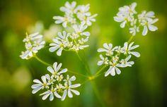 Spring flower. by Ramazan KAMARI on 500px
