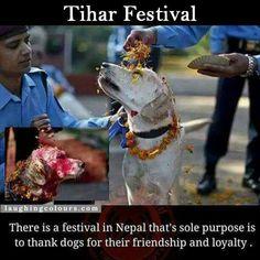 Tihar Festival Honoring Dogs
