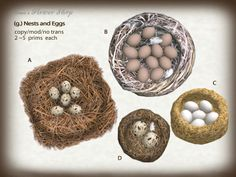 (g.) Nests and Eggs | Flickr - Photo Sharing!