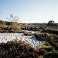 Staatsbosbeheer. Schoorl: Gemarkeerde wandelroutes langs de mooiste plekken van dit natuurgebied. Holland, Europa Tour, Outdoor Fun, Walks, Belgium, Netherlands, Life Hacks, Trail, Places To Visit