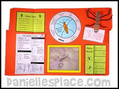 Water Strider Lap Book Lesson from Bug Buddy Studies from www.daniellesplace.com