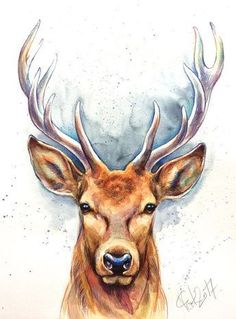 Bildergebnis für zeichnung hirsch - Holiday World Watercolor Art, Art Painting, Animal Art, Animal Drawings, Animal Sketches, Art Drawings Sketches, Art, Animal Paintings, Deer Art