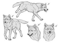 YCH Wolves 7 for sale - 1 LEFT by makangeni wolf poses Animal Sketches, Animal Drawings, Art Sketches, Art Drawings, Wolf Drawings, Anime Wolf Drawing, Drawing Drawing, Drawing Reference, Anime Art