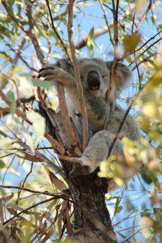 Australia | Work and Travel 2013/2014