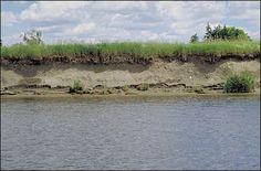 Berge érodée par absence d'arbres - Une des principales caractéristiques de la ripisylve est qu'elle participe efficacement contre l'érosion des berges. C'est l'enracinement des différentes formations végétales et leur complémentarité qui va permettre de prévenir cette érosion