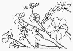 printable flower coloring pages tagged with coloring pages of nature