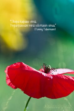 Motivational Quotes, Inspirational Quotes, Poppies, Safari, Poems, Waiting, Life, Google, Art
