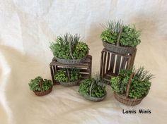 Einzelne Pflanzen