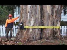 """▶ """"Tree Removal"""" and Tree Climbing techniques with chainsaws - YouTube"""