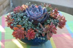 READER PHOTO! Ditch the flowers & grow succulents | Fine Gardening
