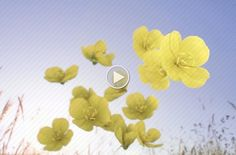 Poster Image Evening Primrose, Poster, Image, Posters