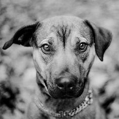 8x8 B portrait  Stray Dogs  Kyra Limited by StrayDogsPortraits, $20.00