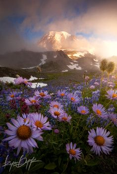 Weather The Storm : Mount Rainier National Park, WA : Ryan Dyar Photography