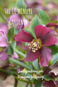 Spring is round the corner and it's time to get on with some Spring planning in the garden.  Here are some quick and profitable garden jobs to tackle now.