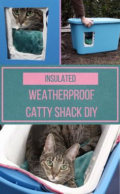 Make Community Cats Feel Like Royalty By Building Them A Cozy Cat Shelter Make common cats kingdom by building a cozy cat house for them Feral Cat Shelter, Feral Cat House, Feral Cats, Shelter Dogs, Tnr Cats, Kitty House, Animal Shelter, Animal Rescue, Insulated Cat House