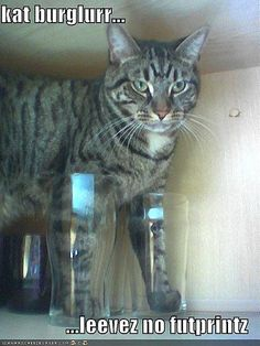 funny-pictures-cat-is-sneaky-burglar