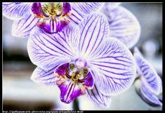 fotografie e altro...: Orchidea - HDR - photographic processing (68)