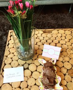 brownies for breakfast? thanks maeve & welcome to caterpillar care! | #maevemccaskey, #caterpillarcare, #caterpillars, #butterflies, #thankyou, #welcome.