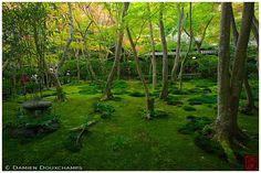 Lantern in moss garden, Giyo-ji temple