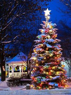 christmas lights Imagine having this big and beautiful Christmas tree in your yard! Diy Christmas Lights, Decorating With Christmas Lights, Merry Little Christmas, Outdoor Christmas, Vintage Christmas, Christmas Decorations, Holiday Decorating, Christmas Tree Colored Lights, Christmas Lights Outside