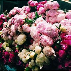 Gorgeous peonies in ombré shades #peonies #pink #ombré #ivory #blush #freshbloom #flowers #fresh #bouquet #bloom