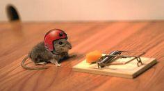 Funny | close funny mouse 1366 x 768 close