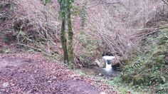 Las Foces del Río Pendón, #ruta de #montaña por #Asturias (#España).