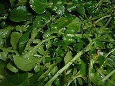 3000 nasturtium officinalis watercress seeds Non GMO Leaf Vegetable, Planting Seeds, Smoothie Bowl, Aquaponics, Seaweed Salad, Perennials, Tea Time, Spinach, Vegetables