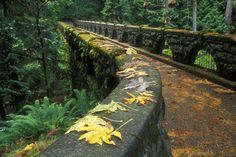 Bridge at Whatcom Falls- Bellingham, WA