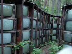 Lithuanian TV forest