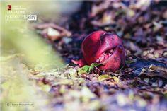 The Wonder Fruit, by Bawar Mohammad Award Winner: Photo of the Day Pomegranates, Award Winner, February, Fruit, Day, Grenades, Pomegranate