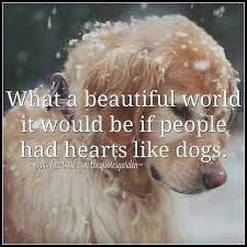 Image result for pinterest dog heart