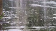 Raining in the City Rain Photography, Photoshop Photography, Video Photography, White Photography, Rain And Thunder, Thunder And Lightning, Background Pictures, Video Background, Rain Animation