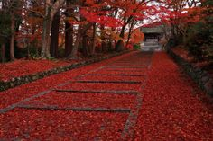 fall leaves - Just beautiful. at