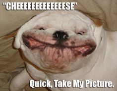Silly Animal Pictures with Captions | animal pictures with captions, cheese quick take my picture
