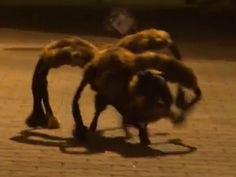 Pet dressed like giant spider goes viral!