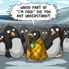 I'm not coping with this change in weather here in CO, people…not at all. I'm eternally grateful that most wedding shoots are planned in the spring and summer! Penguin World, Penguin Life, Penguin Art, Animal Pictures, Funny Pictures, Funny Animals, Cute Animals, Cops Humor, Baby Penguins