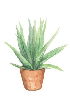 9 Easy Care Houseplants That Are Virtually Impossible Kill Add more green to your house in 2018 with these pretty plants. Plant Painting, Plant Drawing, Plant Art, Painting Art, Easy Care Houseplants, Easy Care Indoor Plants, Watercolor Plants, Floral Watercolor, Watercolor Paintings