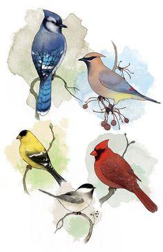 Northern Birds, Blue Jay, Cardinal, Chickadee Giclee Art Print 11 x 17