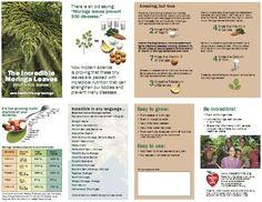 Incredible Moringa Leaves http://www.purehealingfoods.com/infoMyStory.php
