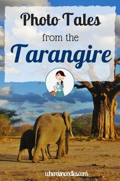 There is something special about The Tarangire, which is often overshadowed by other parks in Tanzania. Check out its amazing wildlife in my latest photo diary.