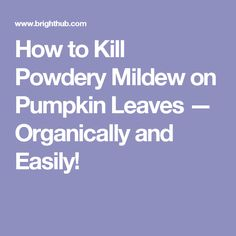 How to Kill Powdery Mildew on Pumpkin Leaves — Organically and Easily!