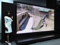 "145-inch plasma display at 8K (7680 x 4320) resolution —called ""Super Hi-Vision"" in Japan"