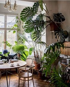 70 Amazing Home Indoor Jungle Decorations Tips and Ideas - Zimmerpflanzen ✪✪✪ - Plants Jungle Decorations, Christmas Decorations, Decoration Plante, Room With Plants, Interior Plants, Botanical Interior, Kitchen Interior, Plant Decor, Houseplants