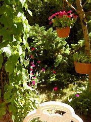 gli acquerelli di Un Giardino In Diretta