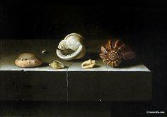 Adriaen Coorte, Six coquillages, 1696, Louvre