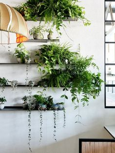 Detail from the indoor garden at The Design Files Open House 2014. The plant selection, curated by Loose Leaf with Georgina Reid of The Planthunter, includes hoyas, string of hearts, devils ivy and various ferns. Photo – Eve Wilson for The Design Files. #goinggreen