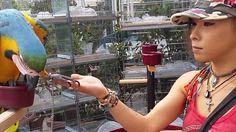 Pétition · Ségolène royale : Contre l'élevage de, perroquets N.A.C et autres animaux dénaturés · Change.org
