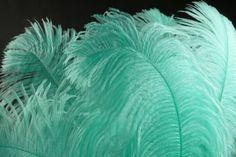 tiffany+blue+wedding+feathers | tiffany blue