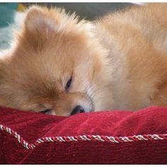 Louie's nap time